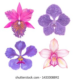 Watercolor marker  tropical orchid flowers set.