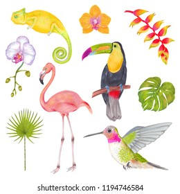 Watercolor marker tropical set of bird, chameleon, flowers and leaves. Toucan flamingo colibri birds, orchid flowers, banana flowers, philodendron, areca palm, fern frond.