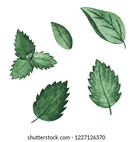 Watercolor mint. Illustration for cartoon, paper, textile, decoration, gifts. Cafe elements.