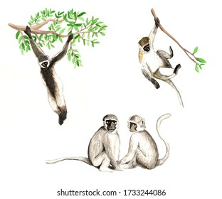 Watercolor monkey illustration in various poses