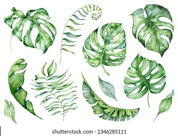 Watercolor monstera leaves set. Tropical plant hand drawn illustration