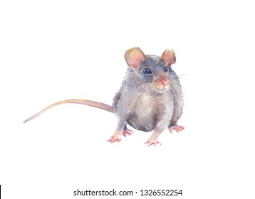 Watercolor mouse isolated on white background. 2020 new year painting symbol. Cute hand drawn baby mouse - Illustration.