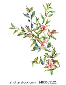 Watercolor Myrtle. Vintage Watercolor Greeting Card with Green Leaves, Twigs, Branches, Blooming flowers of Myrtle. Botanical Natural Watercolor Illustration Isolated on White Background.