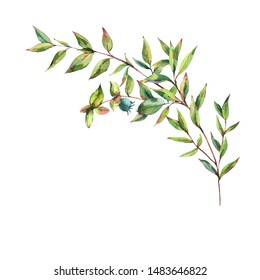 Watercolor Myrtle. Vintage Watercolor Greeting Card with Green Leaves, Twigs, Berries, Branches of Myrtle. Botanical Natural Watercolor Illustration Isolated on White Background.