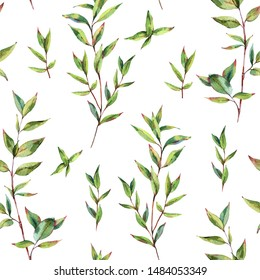 Watercolor Myrtle. Vintage Watercolor Seamless Pattern with Green Leaves, Twigs, Branches of Myrtle. Botanical Natural Watercolor Texture on White Background.