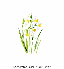 watercolor Narcissus. This image can be used for postcards invitations flyers