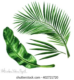 Watercolor Nature Clipart - Palm leaves