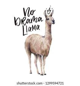 Watercolor No drama llama card with llama. Hand painted beautiful illustration with smiling animal and lettering isolated on white background. For design, print, fabric or background