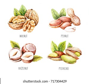 Watercolor nuts isolated. Hand drawn Walnut, Peanut, Hazelnut and Pistachio.