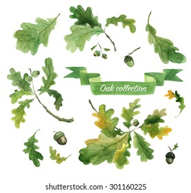 Watercolor oak leaves, branches and acorns. Hand drawn illustration.