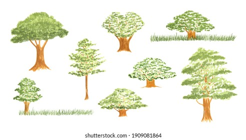 Watercolor oak trees set isolated on white. Hand drawn forest design elements for logo, wedding card design, genealogical tree and other.
