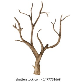Watercolor old dry bare tree isolated on white background. Hand painting on paper