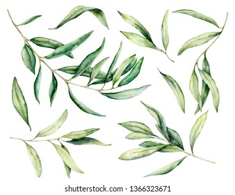 Watercolor olive branch and leaves set. Hand painted floral illustration isolated on white background for design, print, fabric or background