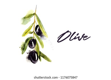 Watercolor olive branch with olives  on white background. Hand drawn watercolor illustration with splashes