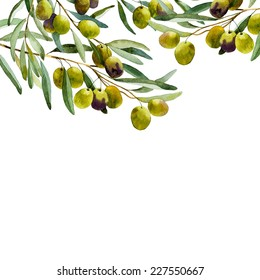 watercolor olive branch on white background