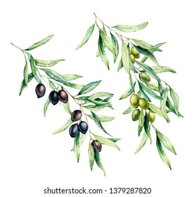 Watercolor olive tree branch set with green and black olives, leaves. Hand painted floral illustration isolated on white background for design, print, fabric or background
