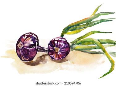 watercolor onion