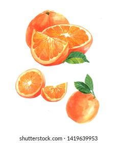 Watercolor orange fruit illustration isolated on white background
