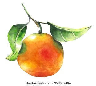 Watercolor orange painting on a white background