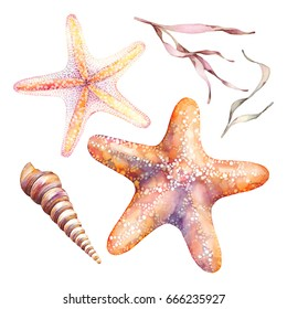 Watercolor orange starfishes, seaweed and sea shells isolated on white background. Watercolor illustration