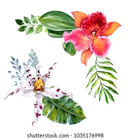 Watercolor orchid flowers and tropical leaves on a white background.