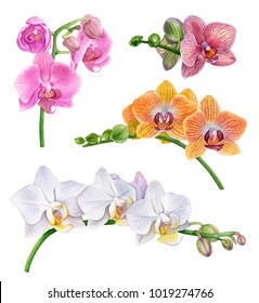 Watercolor orchid flowers.  Yellow, pink, purple, white orchid branches. Beautiful flowers isolated  on white background.