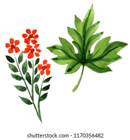 Watercolor ornament  of leaves and flowers. Floral botanical flower. Isolated illustration element. Aquarelle wildflower for background, texture, wrapper pattern, frame or border.