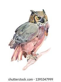 Watercolor owl bird animal illustration isolated on white background