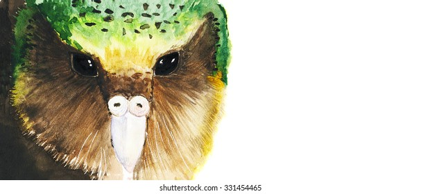 watercolor owl parrot kakapo