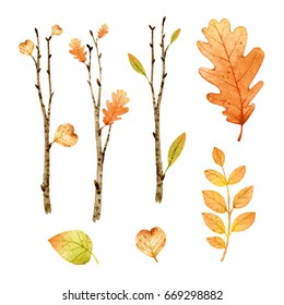 Watercolor paint tree branch isolated on white background.Hand painting on paper. Orange leaves. Autumn.