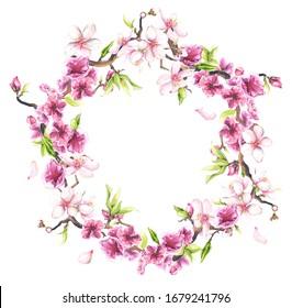 Watercolor painted pink cherry blossoms. Floral wreath. Arrangement illustration.