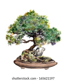 Watercolor painted spruce bonsai tree in pot