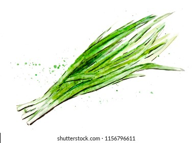 Watercolor painted vegetables. Hand drawn fresh food design elements isolated on white background. Sketch with color splashes Bunching onion chive
