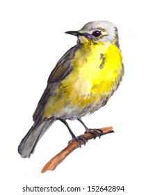 Watercolor painted yellow bird
