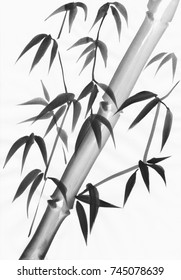 Watercolor painting of bamboo leaves with a slanted stem. Black gouache on white paper study.