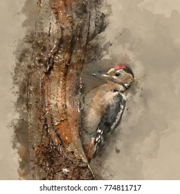 watercolor painting of Beautiful Great Spotted Woodpecker bird Dendrocopos Major on tree stump in forest landscape setting