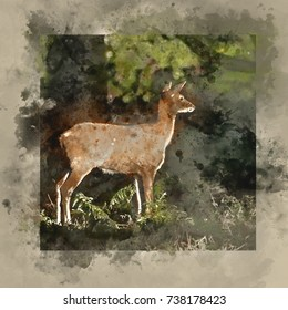 Watercolor painting of Beautiful hind doe red deer cervus elaphus in dappled sunlight forest Autumn Fall landscape