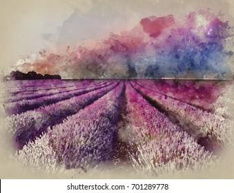 Lavender Fields Watercolor Hd Stock Images Shutterstock