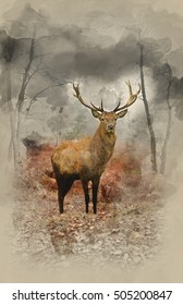 Watercolor painting of Beautiful image of red deer stag in forest landscape of foggy misty forest in Autumn Fall
