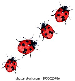 Watercolor painting of Beautiful red lady bug art illustration