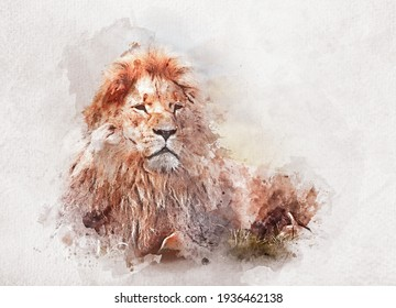 Watercolor painting of big proud lion. Artistic animal theme