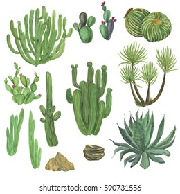 watercolor painting big set with hand drawn cactus garden elements