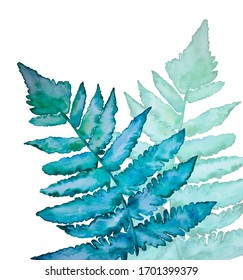 Watercolor painting of blue and green ferns
