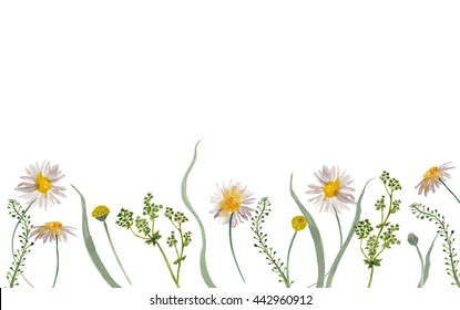 Watercolor painting chamomile  flowers and leaves isolated on white. Design for invitation, wedding or greeting cards