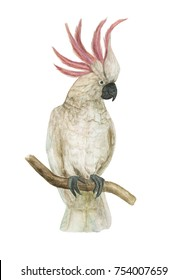 Watercolor painting cockatoo bird