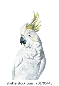 watercolor painting - cockatoo (white and yellow)