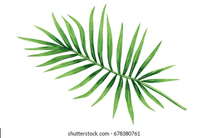Watercolor painting coconut, palm leaf,green leaves isolated on white background.Watercolor hand painted illustration tropical exotic leaf for wallpaper vintage Hawaii style pattern.With clipping path
