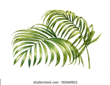 watercolor painting of coconut palm leaves isolated on white.