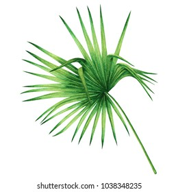 Watercolor painting coconut,palm leaf,green leaves isolated on white background.Watercolor hand painted illustration tropical exotic leaf for wallpaper vintage Hawaii style pattern.With clipping path.