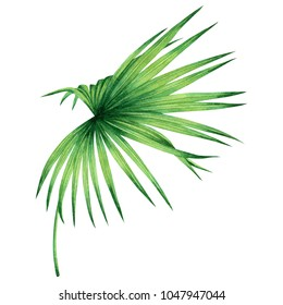 Watercolor painting coconut,palm leaf,green leaves isolated on white background.Watercolor hand painted illustration tropical exotic leaf for wallpaper vintage Hawaii style pattern.With clipping path